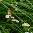 6月の舞岡公園 小さな生き物たち