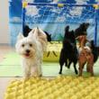 幼稚園体験にきてくれた【エルマーくん】(*^-^*)  犬のしつけ教室@アロハドギー