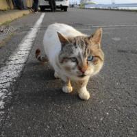 港の猫 Ⅲ
