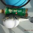 沖釣り中止で つりんぼ丸大掃除しながら浜名湖五目釣り