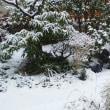 春分の日、雪が降っています。