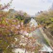生田川沿いの桜