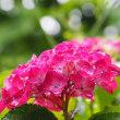 日本の夏 3つの夏