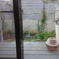 今日の庭^^(平成30年11月14日)