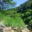 第14回 身近な水環境の全国一斉調査