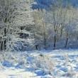 雪景色~金のなる木。