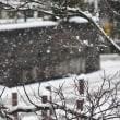 昨夜から雪、気温は3℃、雪雲は居座り続け