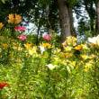 2017年ゆりの花咲く頃・・ところざわのゆり園