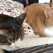 お母ちゃん&2匹の猫のまったり日曜日【猫日記こむぎ&だいず】2018 07 08