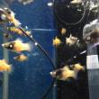 熱帯魚各種入荷!