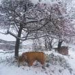 またまた雪が