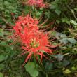 花と虫と多摩川と