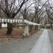 13日の散歩 ( 仁和寺往復で冬だより )