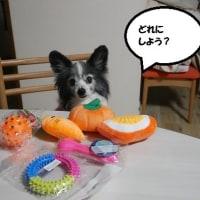 さにさんのおもちゃ選び