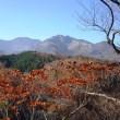 霧降の滝と紅葉 11/15誕生花・・ロベリア(青)