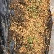 2/10(土)ジャガイモなど 畑のお買いもの & 2/16(金)ワケギ や 芽が出ちゃったから植えちゃったニンニクのお手入れ^^