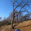 木の上眺めとパラグラーダーからの眺め