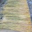 稲わらを乾かす