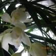 今朝の花…他