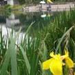 <曽根城公園>のハナショウブが見頃です♪