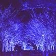代々木公園ケヤキ並木通り・青の洞窟