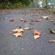 秋の終わり…