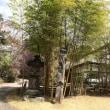 竹寺トライで想定外の。。。。