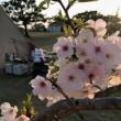 桜とテントと、しっぺい君。~お客様のテントを拝借~