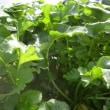 屋上菜園113 (H30.11.1~)