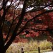 つくば実験植物園秋の風景