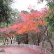 紅葉を 撮る