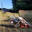 早朝から稲刈り