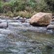 狩野川、前日の釣り残し狙い