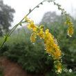 平成29年8月16日(水) 雨の裏山で花見♪