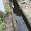 水路の水が止まっていました