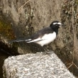 散歩道の野鳥たち