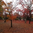 雪と紅葉の十日町