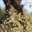 六甲高山植物園の4月のお花達~♪