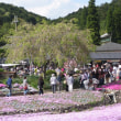 永沢寺の花のじゅうたん