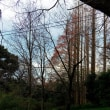再び小石川植物園へ