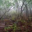 ガスと雨の菰釣山-畦ヶ丸