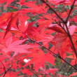 岐阜県土岐市内の森へ