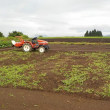 隣の畑の蕎麦が芽生えた