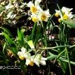 輝き出した春