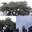 10月19日(金)今日の北川桜