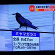 12/15 佐賀県のカラス 中国から越冬に来ているって!!