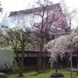 2017桜 その1 越中の桜 その1 氷見、砺波の桜