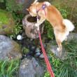 岩清水風水道水はおいしい?