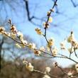 梅花咲くⅠ