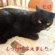 高齢(20歳)リンちゃん猫風邪治療、新たに